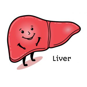 Targeting liver health during a cleanse is crucial
